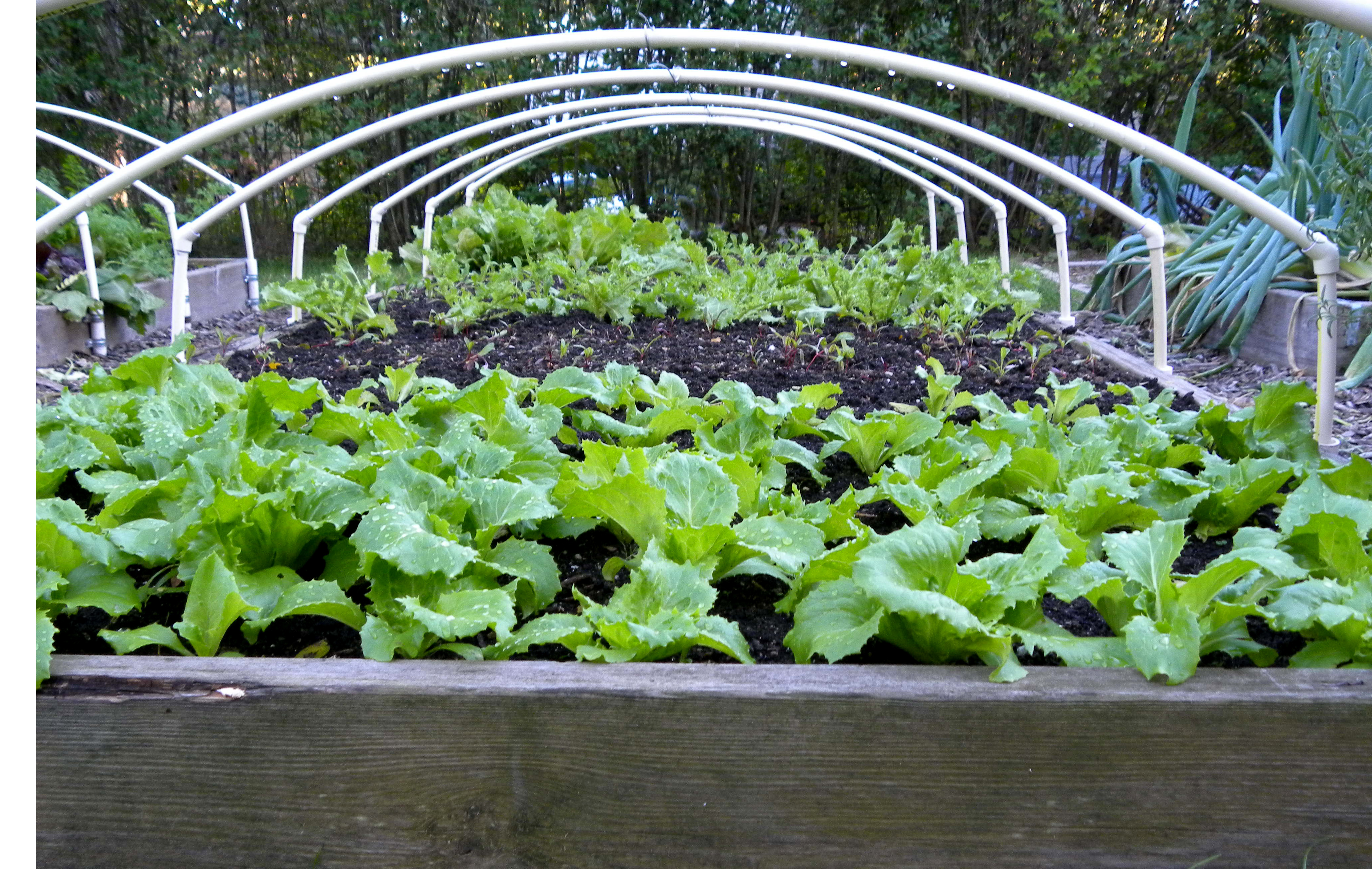 Get ready for winter gardening the organic italian for Winter garden designs ideas